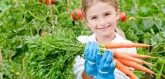 OGM: respondemos a sus preguntas